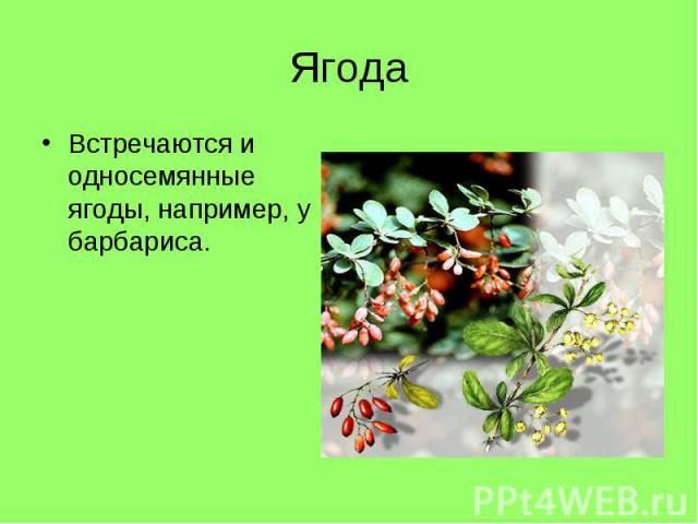 Встречаются и односемянные ягоды, например, у барбариса. Встречаются и односемянные ягоды, например, у барбариса.