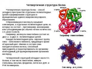 Четвертичная структура белка – способ укладки в пространстве отдельных полипепти