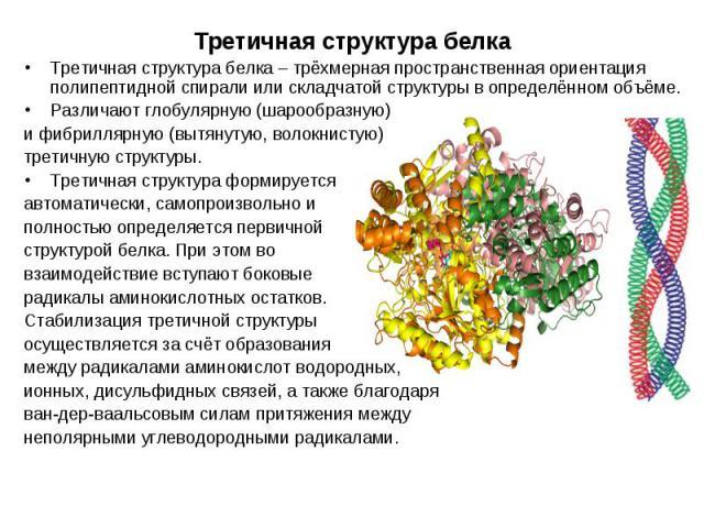 Третичная структура белка – трёхмерная пространственная ориентация полипептидной спирали или складчатой структуры в определённом объёме. Третичная структура белка – трёхмерная пространственная ориентация полипептидной спирали или складчатой структур…