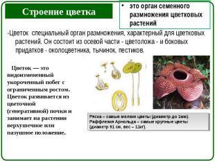 -Цветок специальный орган размножения, характерный для цветковых растений. Он со
