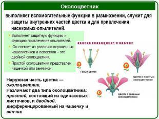выполняет вспомогательные функции в размножении, служит для защиты внутренних ча