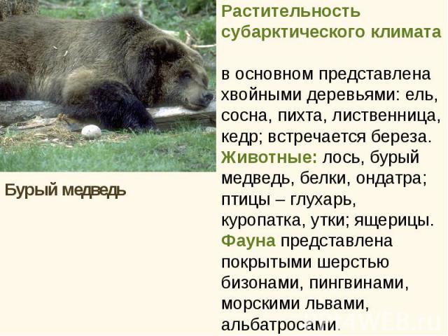 Бурый медведь Бурый медведь