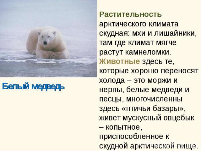 Белый медведь Белый медведь