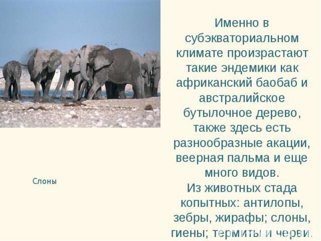 Слоны Слоны
