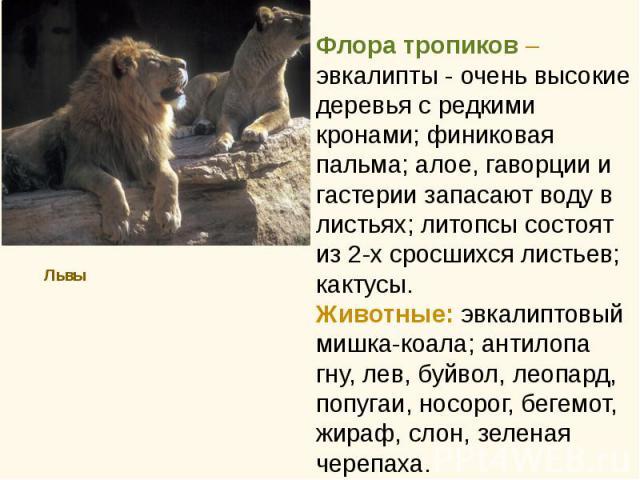 Львы Львы