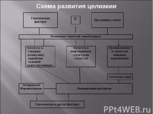 Схема развития целиакии