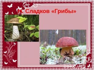 Н. Сладков «Грибы»