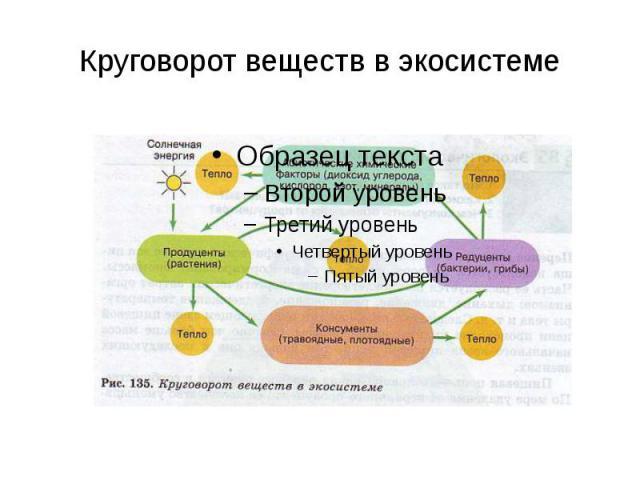 Круговорот веществ в экосистеме