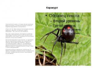 Каракурт Зачастую бытует мнение, что самые опасные насекомые водятся в странах с