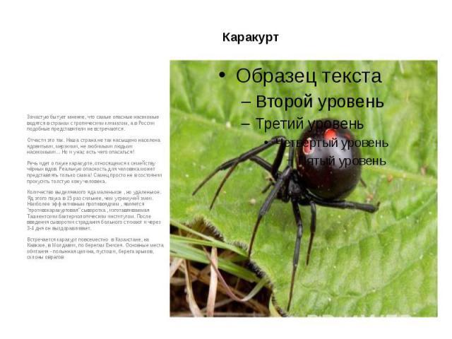 Каракурт Зачастую бытует мнение, что самые опасные насекомые водятся в странах с тропическим климатом, а в России подобные представители не встречаются. Отчасти это так. Наша страна не так насыщено населена ядовитыми, мерзкими, не любимыми людьми на…