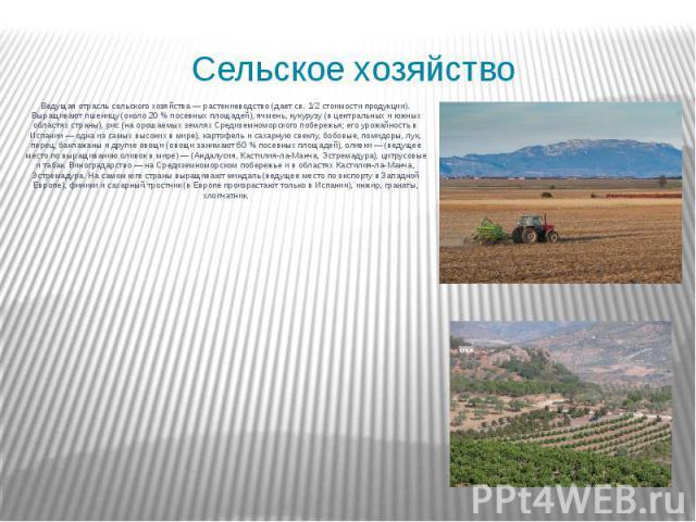 Сельское хозяйство Ведущая отрасль сельского хозяйства — растениеводство (дает св. 1/2 стоимости продукции). Выращивают пшеницу (около 20 % посевных площадей), ячмень, кукурузу (в центральных и южных областях страны), рис (на орошаемых землях Средиз…