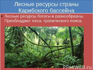 Лесные ресурсы страны Карибского бассейна Лесные ресурсы богаты и разнообразны.