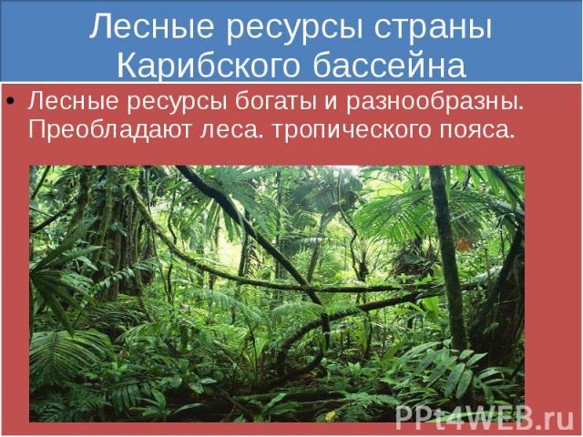 Лесные ресурсы страны Карибского бассейна Лесные ресурсы богаты и разнообразны. Преобладают леса. тропического пояса.