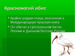 Крайне редкая птица, внесенная в Международную Красную книгу Крайне редкая птица