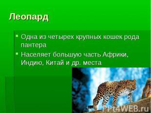 Одна из четырех крупных кошек рода пантера Одна из четырех крупных кошек рода па
