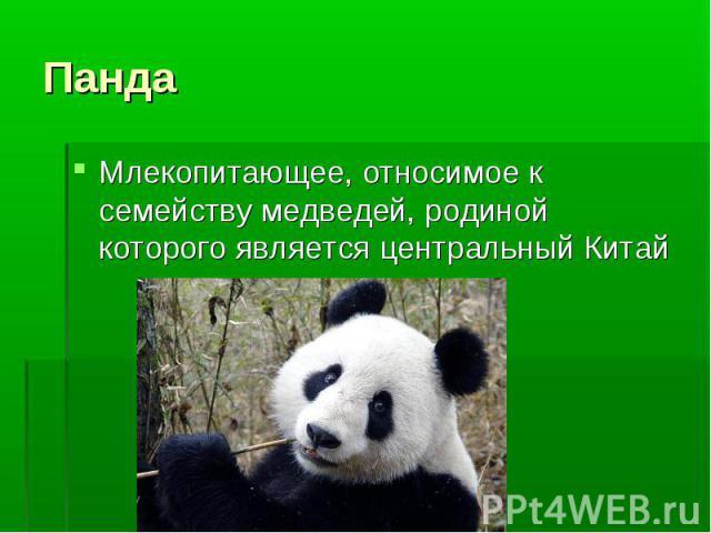 Млекопитающее, относимое к семейству медведей, родиной которого является центральный Китай Млекопитающее, относимое к семейству медведей, родиной которого является центральный Китай