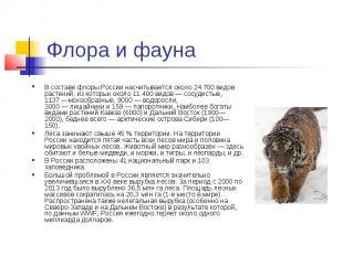 Флора и фауна В составе флоры России насчитывается около 24 700 видов растений,