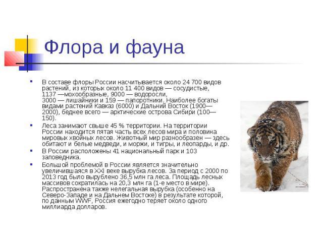 Флора и фауна В составе флоры России насчитывается около 24 700 видов растений, из которых около 11 400 видов—сосудистые, 1137—мохообразные, 9000—водоросли, 3000—лишайникии 159—папоротники.…