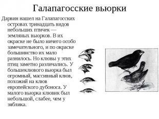 Дарвин нашел на Галапагосских островах тринадцать видов небольших птичек — земля