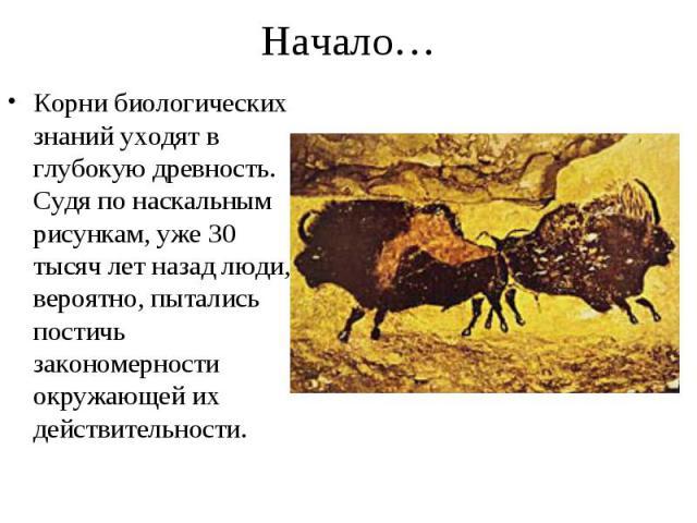 Корни биологических знаний уходят в глубокую древность. Судя по наскальным рисункам, уже 30 тысяч лет назад люди, вероятно, пытались постичь закономерности окружающей их действительности. Корни биологических знаний уходят в глубокую древность. Судя …