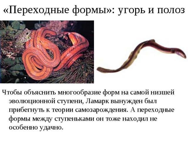 Чтобы объяснить многообразие форм на самой низшей эволюционной ступени, Ламарк вынужден был прибегнуть к теории самозарождения. А переходные формы между ступеньками он тоже находил не особенно удачно. Чтобы объяснить многообразие форм на самой низше…