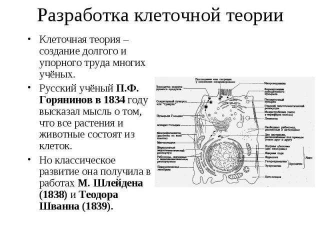 Клеточная теория – создание долгого и упорного труда многих учёных. Клеточная теория – создание долгого и упорного труда многих учёных. Русский учёный П.Ф. Горянинов в 1834 году высказал мысль о том, что все растения и животные состоят из клеток. Но…
