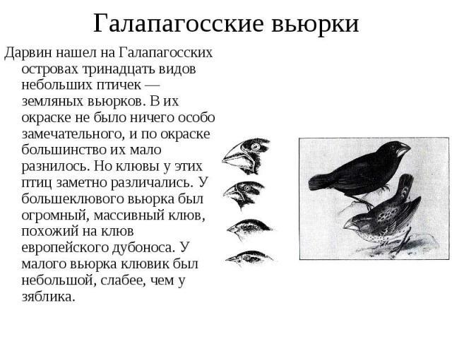Дарвин нашел на Галапагосских островах тринадцать видов небольших птичек — земляных вьюрков. В их окраске не было ничего особо замечательного, и по окраске большинство их мало разнилось. Но клювы у этих птиц заметно различались. У большеклювого вьюр…