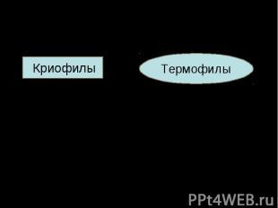 Криофилы Криофилы