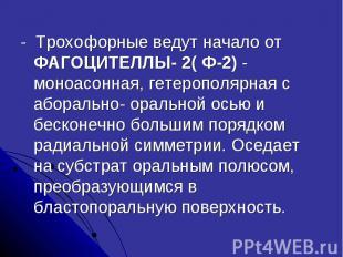 - Трохофорные ведут начало от ФАГОЦИТЕЛЛЫ- 2( Ф-2) - моноасонная, гетерополярная