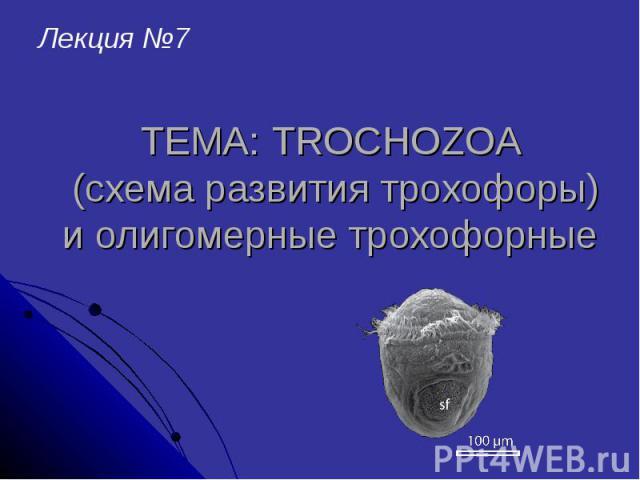 ТЕМА: TROCHOZOA (схема развития трохофоры) и олигомерные трохофорные