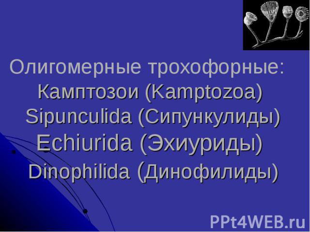 Олигомерные трохофорные: Камптозои (Kamptozoa) Sipunculida (Сипункулиды) Echiurida (Эхиуриды) Dinophilida (Динофилиды)