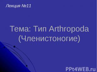 Тема: Тип Arthropoda (Членистоногие)