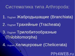 Систематика типа Arthropoda: