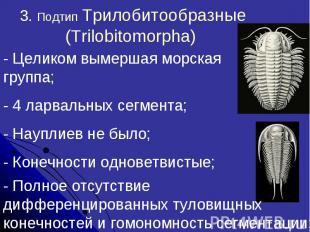 3. Подтип Трилобитообразные (Trilobitomorpha)