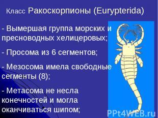Класс Ракоскорпионы (Eurypterida)