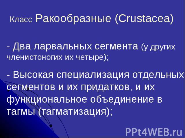 Класс Ракообразные (Crustacea)
