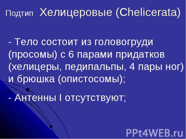 Подтип Хелицеровые (Chelicerata)