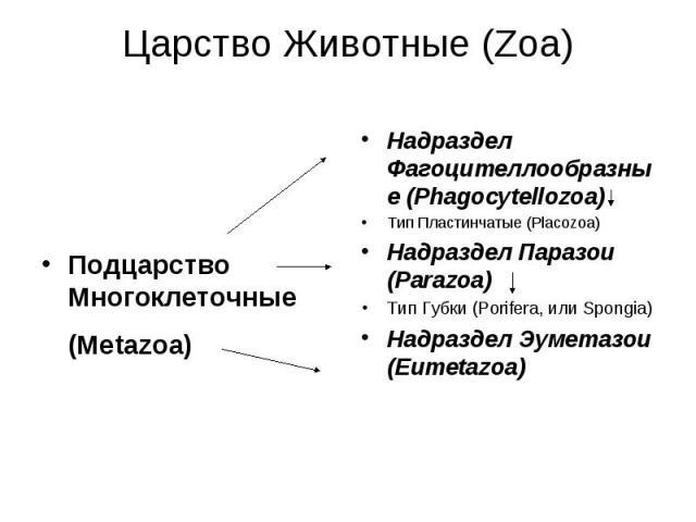 Подцарство Многоклеточные (Metazoa)