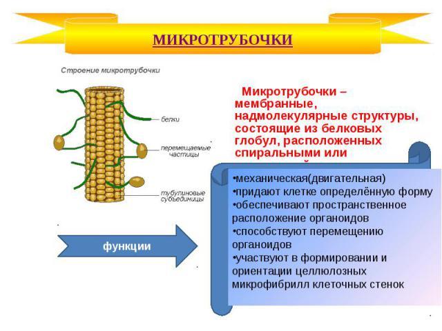 Микротрубочки – мембранные, надмолекулярные структуры, состоящие из белковых глобул, расположенных спиральными или прямолинейными рядами. Микротрубочки – мембранные, надмолекулярные структуры, состоящие из белковых глобул, расположенных спиральными …