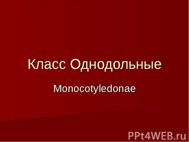 Класс Однодольные Monocotyledonae