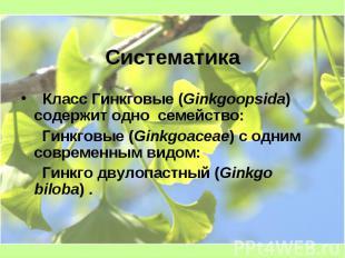 Систематика Класс Гинкговые (Ginkgoopsida) содержит одно семейство: Гинкговые (G