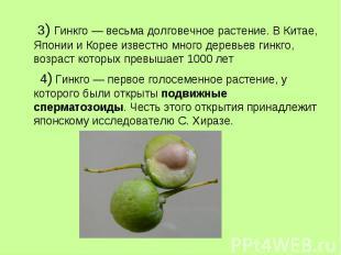 3) Гинкго — весьма долговечное растение. В Китае, Японии и Корее известно много