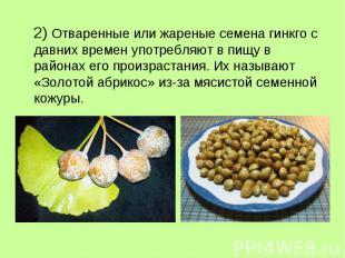 2) Отваренные или жареные семена гинкго с давних времен употребляют в пищу в рай