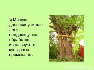 3) Мягкую древесину гинкго, легко поддающуюся обработке, используют в кустарных