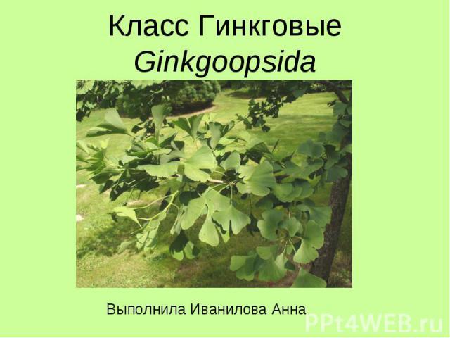 Класс Гинкговые Ginkgoopsida