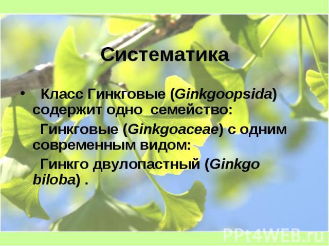 Систематика Класс Гинкговые (Ginkgoopsida) содержит одно семейство: Гинкговые (Ginkgoaceae) с одним современным видом: Гинкго двулопастный (Ginkgo biloba) .