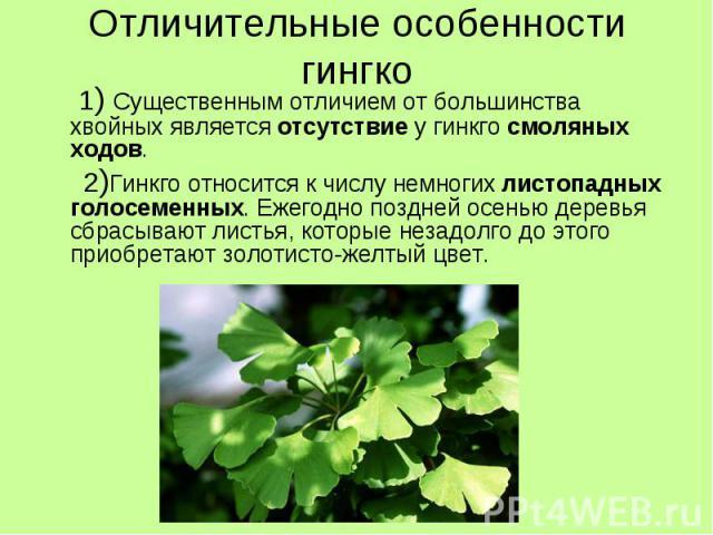 Отличительные особенности гингко 1) Существенным отличием от большинства хвойных является отсутствие у гинкго смоляных ходов. 2)Гинкго относится к числу немногих листопадных голосеменных. Ежегодно поздней осенью деревья сбрасывают листья, которые не…
