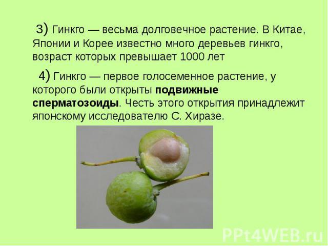 3) Гинкго — весьма долговечное растение. В Китае, Японии и Корее известно много деревьев гинкго, возраст которых превышает 1000 лет 4) Гинкго — первое голосеменное растение, у которого были открыты подвижные сперматозоиды. Честь этого открытия прина…