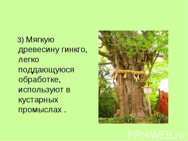 3) Мягкую древесину гинкго, легко поддающуюся обработке, используют в кустарных промыслах .