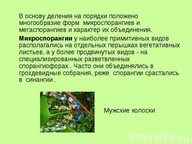 В основу деления на порядки положено многообразие форм микроспорангиев и мегаспорангиев и характер их объединения. Микроспорангии у наиболее примитивных видов располагались на отдельных перышках вегетативных листьев, а у более продвинутых видов - на…